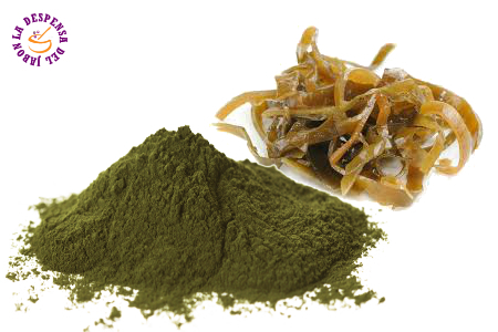 Kelp Algae Micronized extract Bio