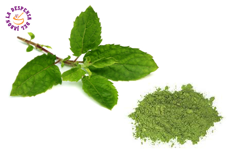Tulsi pure powder extract - BIO