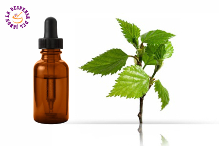 Birch extract HG