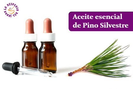 Wild pine essential oil